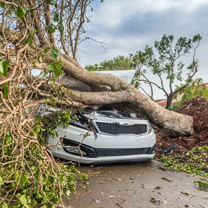 Car damaged by a fallen tree after strong winds in Florida.