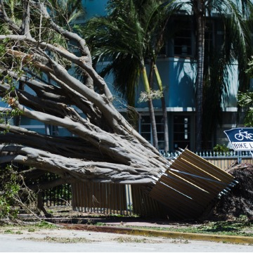 Fallen tree after a hurricane in Florida causing property damage